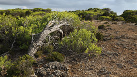 Landscape on Majorca Royalty Free Stock Image
