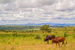 Landscape in Malawi. View at picturesque rural landscape near capita city of Malawi, Lilongwe Royalty Free Stock Images