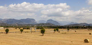 Landscape in Mallorca. Field landscape with hay bales, Mediterranean vegetation and iconic mountains in the background (Puig d'Alaro and Puig de s'Alcadena) Stock Images