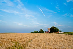 Landscape with malt field. Malt field on the foreground and buildings on the background royalty free stock image