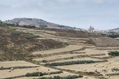 Landscape of maltese island Gozo. Rural landscape with vineyards and stubble fields on the hills of maltese island Gozo Royalty Free Stock Image
