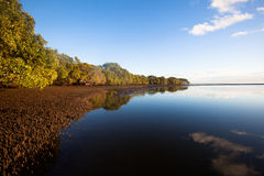 Landscape of Mangroves Royalty Free Stock Images