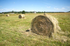 Landscape with many hay rolls on cultivate field Royalty Free Stock Photo