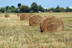 Landscape with many hay rolls on cultivate field Royalty Free Stock Photos