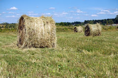 Landscape with many hay rolls on cultivate field Stock Photo