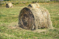 Landscape with many hay rolls on cultivate field Royalty Free Stock Images