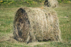 Landscape with many hay rolls on cultivate field Royalty Free Stock Image
