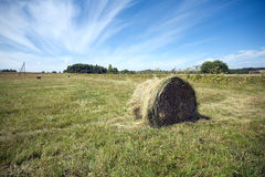Landscape with many hay rolls on cultivate field Stock Photos