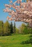 Landscape  with many trees Royalty Free Stock Photos