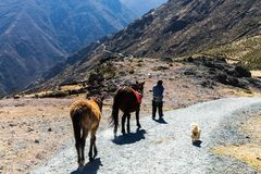 Long road in the mountains of Peru royalty free stock image