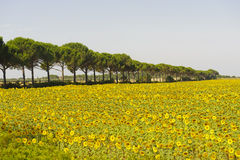 Landscape in Maremma (Tuscany) Stock Photo