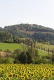Landscape in Maremma (Tuscany) Royalty Free Stock Photo