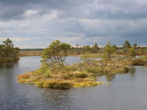 Landscape of Marimetsa bog Stock Photo