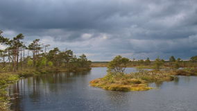 Landscape of Marimetsa bog Royalty Free Stock Photos