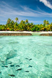 Landscape and marine life at tropical island of Stock Photos