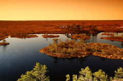 Landscape of a marsh in Estonia stock photography