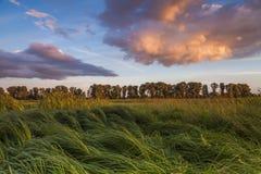 Landscape with marsh Stock Photo