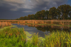 Landscape with marsh Royalty Free Stock Photos