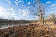 Landscape with marsh in springtime Stock Image