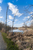 Landscape with marsh in springtime Stock Photos