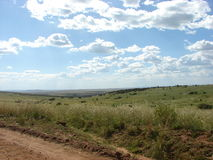 Landscape in masai mara. The landscape with cloudy sky Royalty Free Stock Photo