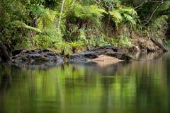 Landscape of Masoala National Park, Madagascar Royalty Free Stock Images