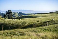Landscape Matamata Royalty Free Stock Photos