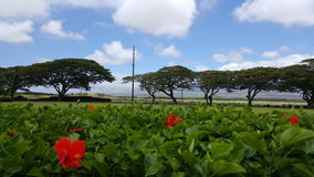 Landscape on Maui. Hibiscus bushes and trees in the background Stock Photos
