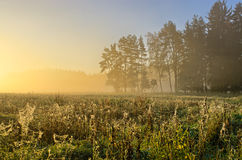 Landscape with meadow covered by cobwebs Stock Image