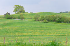 Landscape with meadow Stock Photos