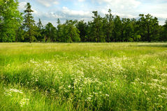 Landscape with meadow and forest Royalty Free Stock Photos