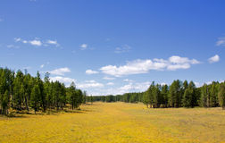 Landscape with meadow and forest in the autumn Royalty Free Stock Photography