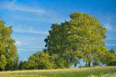 Landscape with meadow and forest Royalty Free Stock Photo