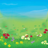 Landscape with meadow,grass, flowers,sky and fog. Panoramic landscape with meadow, grass, flowers,cloudy sky and fog Stock Images
