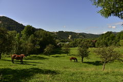 Landscape with meadow and horses Stock Photography