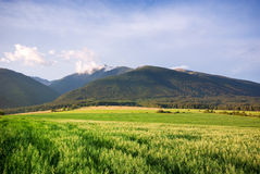 Landscape - meadow and mounaints stock image