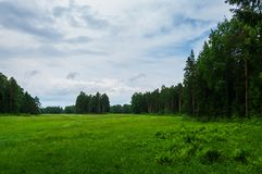 Landscape with meadow and pines Royalty Free Stock Image