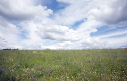 Landscape with meadow and sky Royalty Free Stock Image