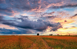 Landscape of meadow sunset, countryside Royalty Free Stock Photos