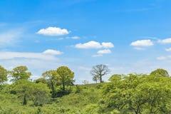 Landscape Meadow Tropical Scene, Ecuador. Landscape meadow tropical scene at outdoors in Guayas district, Ecuador Stock Photography