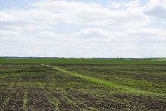 Landscape meadows Royalty Free Stock Photos