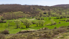 Landscape of meadows, groves of oaks and mountain Stock Image