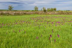 Landscape with Meadows and Orchids Stock Photos