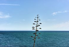 Sea view blue sky and some clouds. Landscape mediterranean sea view with a tree Stock Image