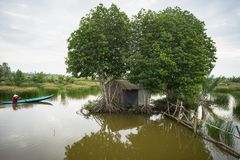Landscape of Mekong delta with mangrove tree, floating house and rowing boat in Ca Mau province, Mekong delta, south of Vietnam.  royalty free stock photo
