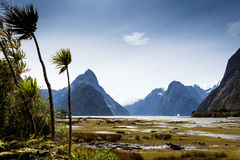 Landscape at milford sound Royalty Free Stock Images