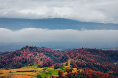 Landscape of mist around forest. Thick mist in a mountain panorama Royalty Free Stock Photography