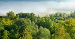 Landscape with mist and tree. Stock Image