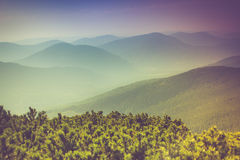 Landscape of misty mountain hills covered by forest. stock photos