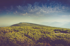 Landscape of misty mountain hills covered by forest. Stock Images